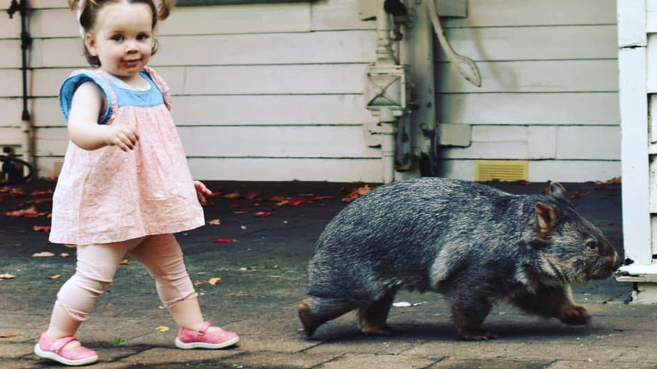 Unlikely best friends: Isabella and her wombat, Boo