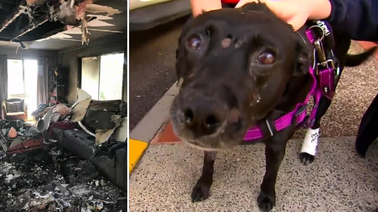 Beloved family pet emerges after devastating house fire