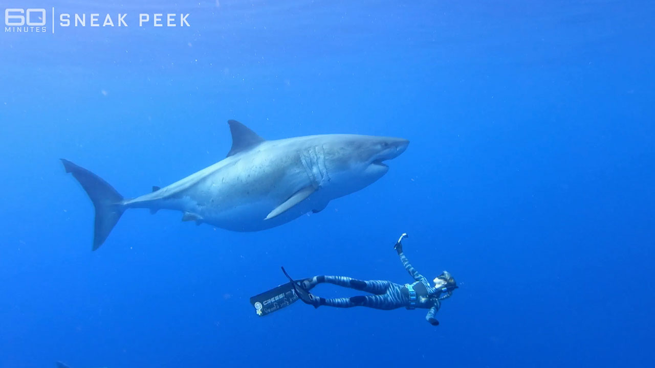 Sneak peek: The Shark Whisperer | Sunday on 60 Minutes