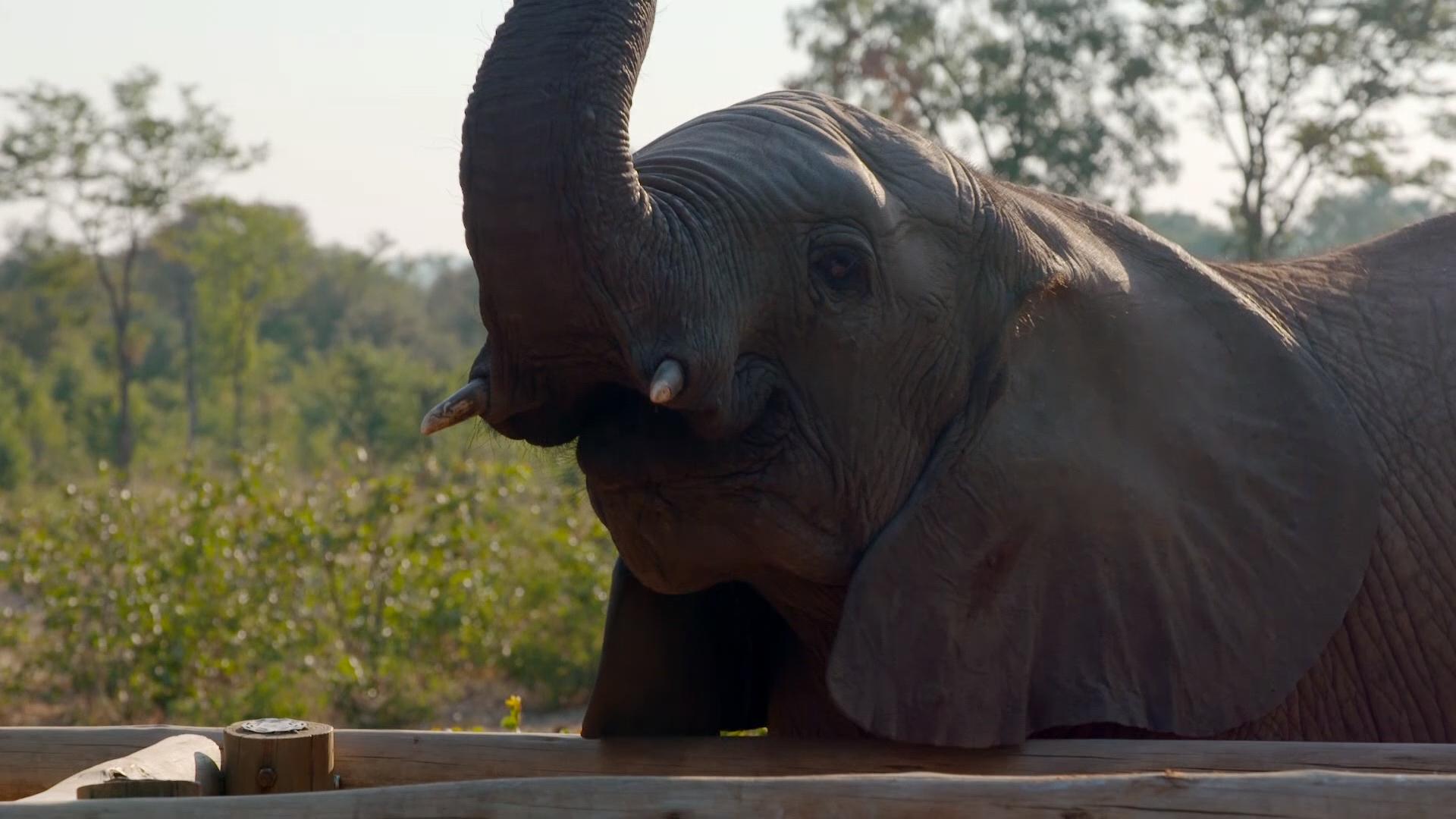 Wild Horizons Elephant Sanctuary