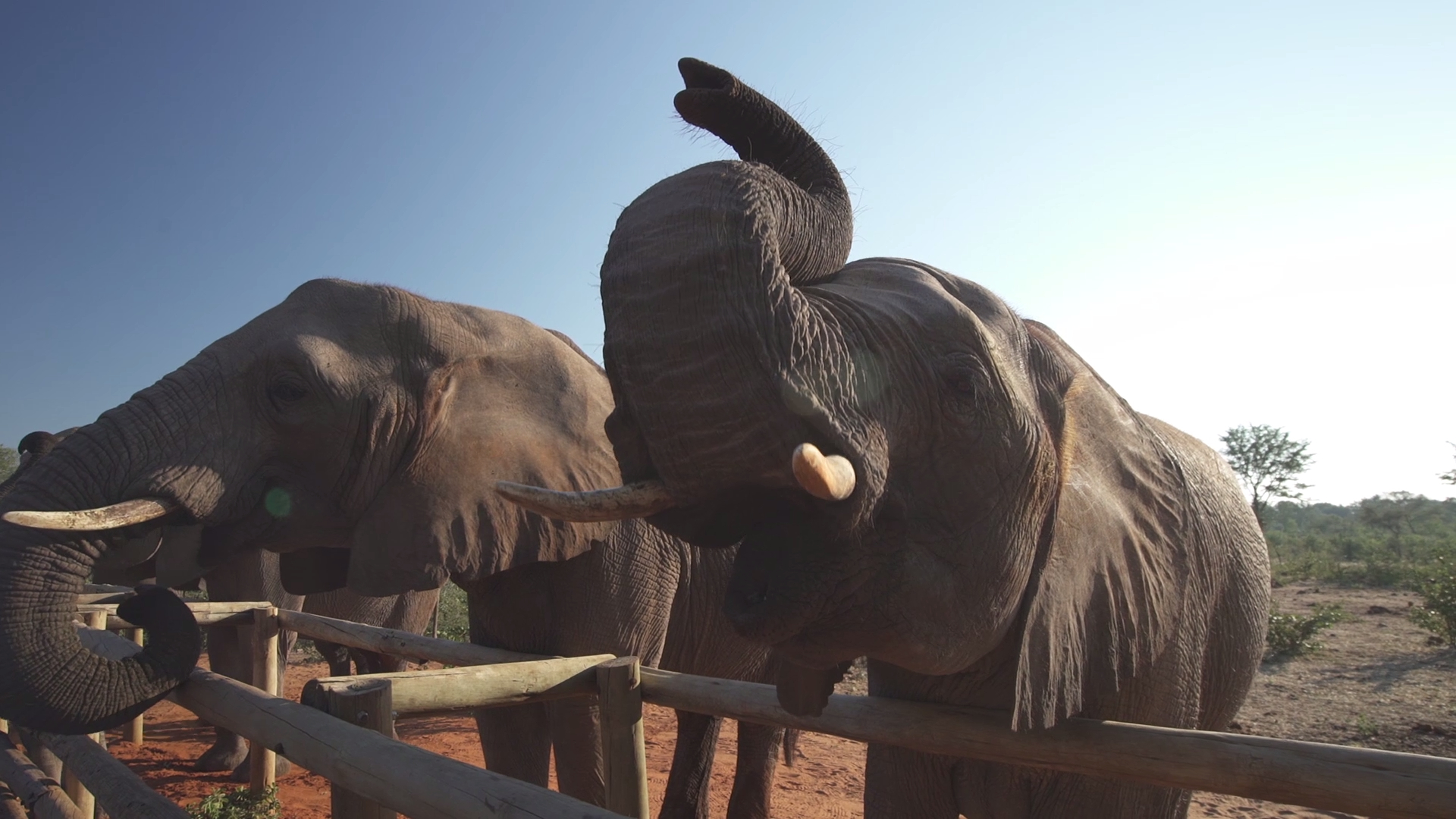 Bonus footage from Getaway's visit to Wild Horizons Elephant Sanctuary