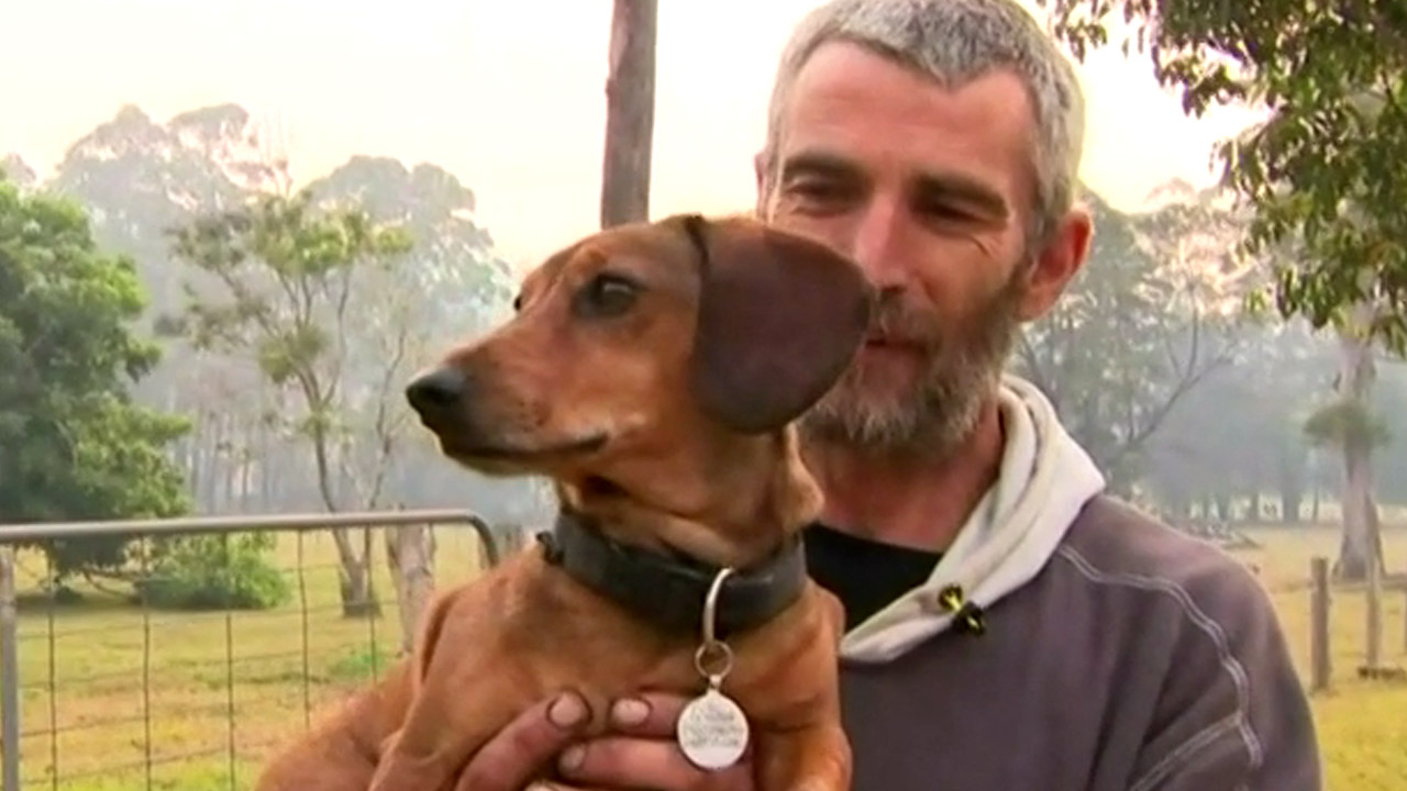 Wilbur the sausage dog reunited with overjoyed owner