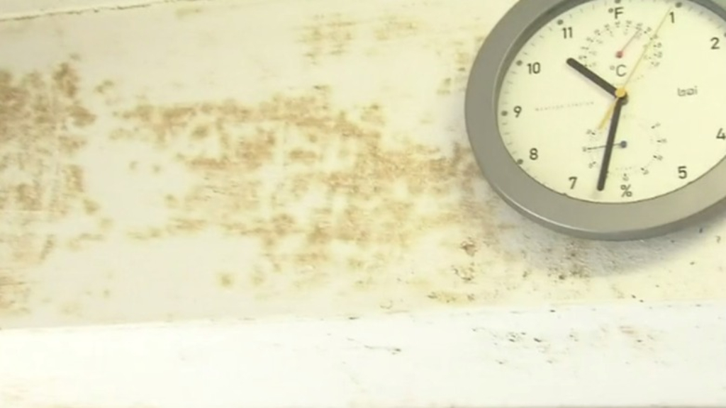 How to prevent mould infestations as winter bites