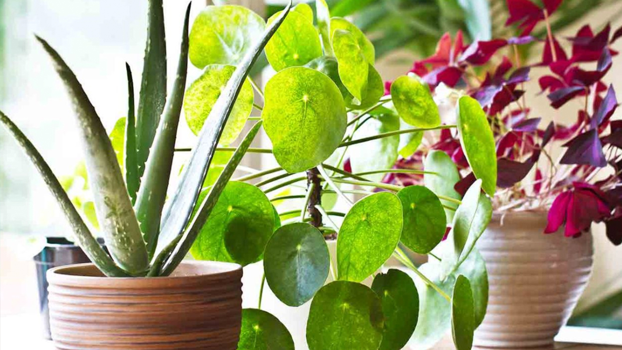 How indoor plants act as an aircon for the home