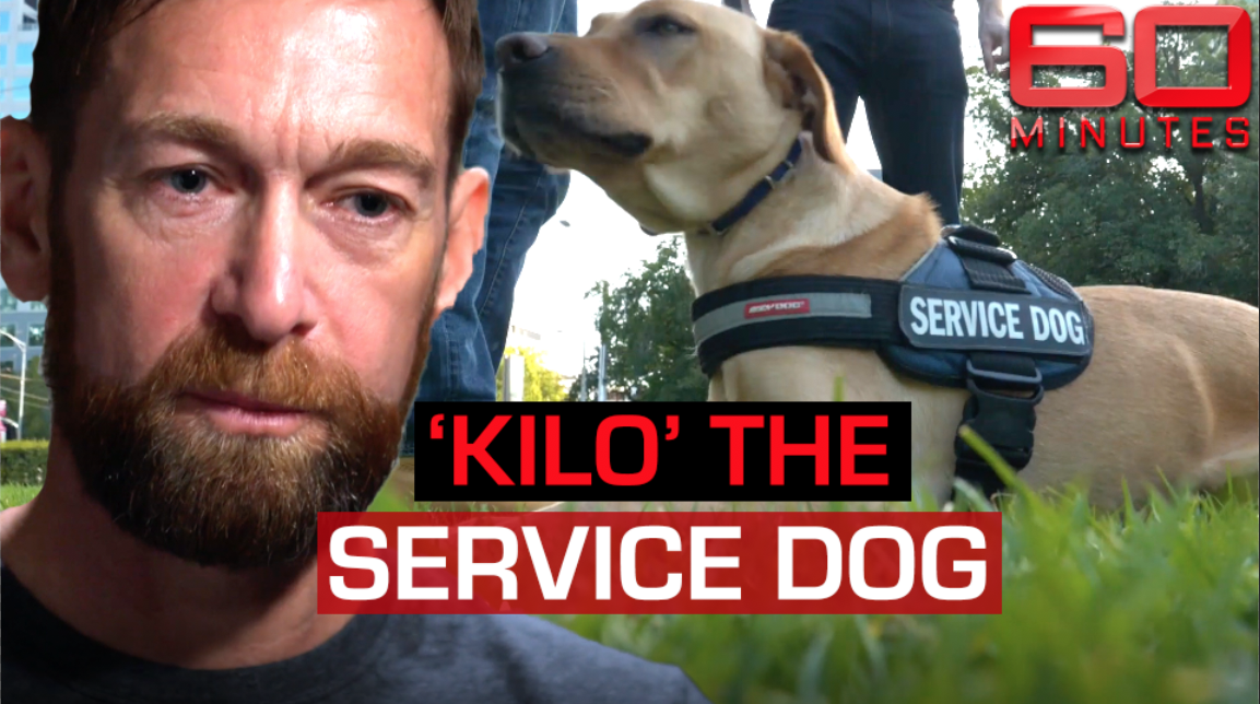 Meet Kilo the service dog helping former soldier heal