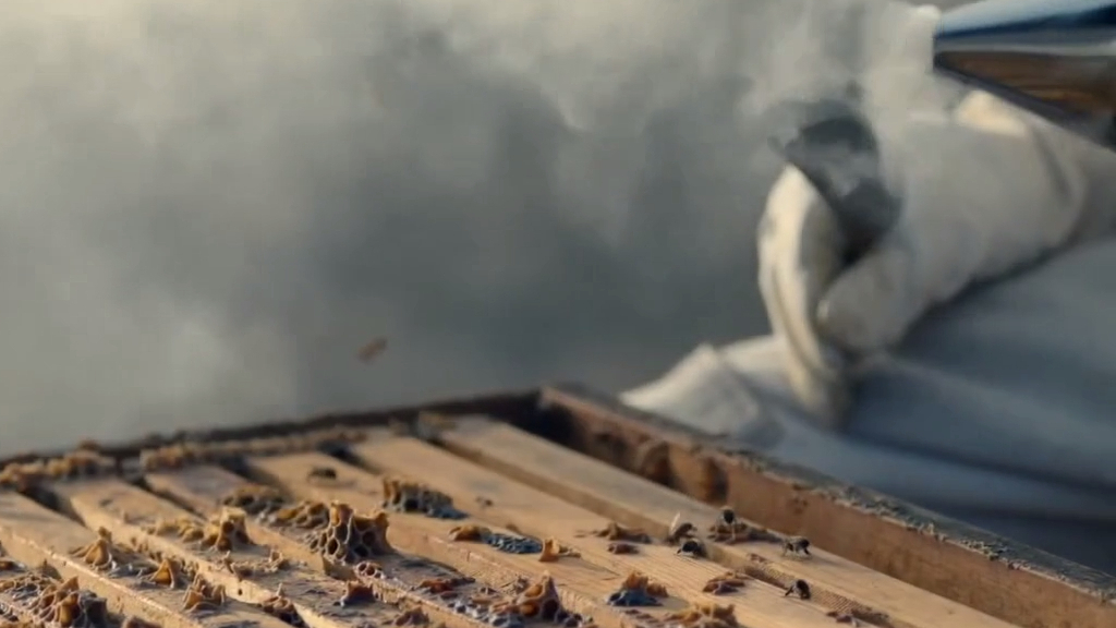 The not-so-sweet truth about honey