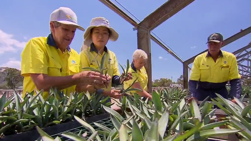 Pioneering farmers bring tequila Down Under