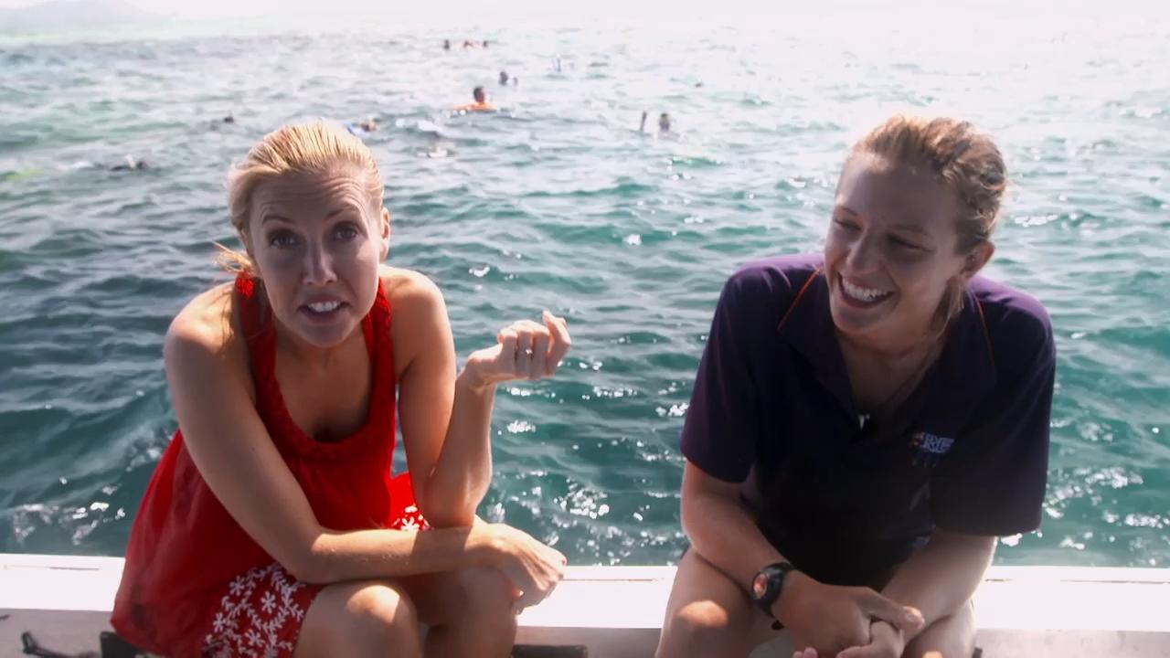 Fiji Shark Snorkel
