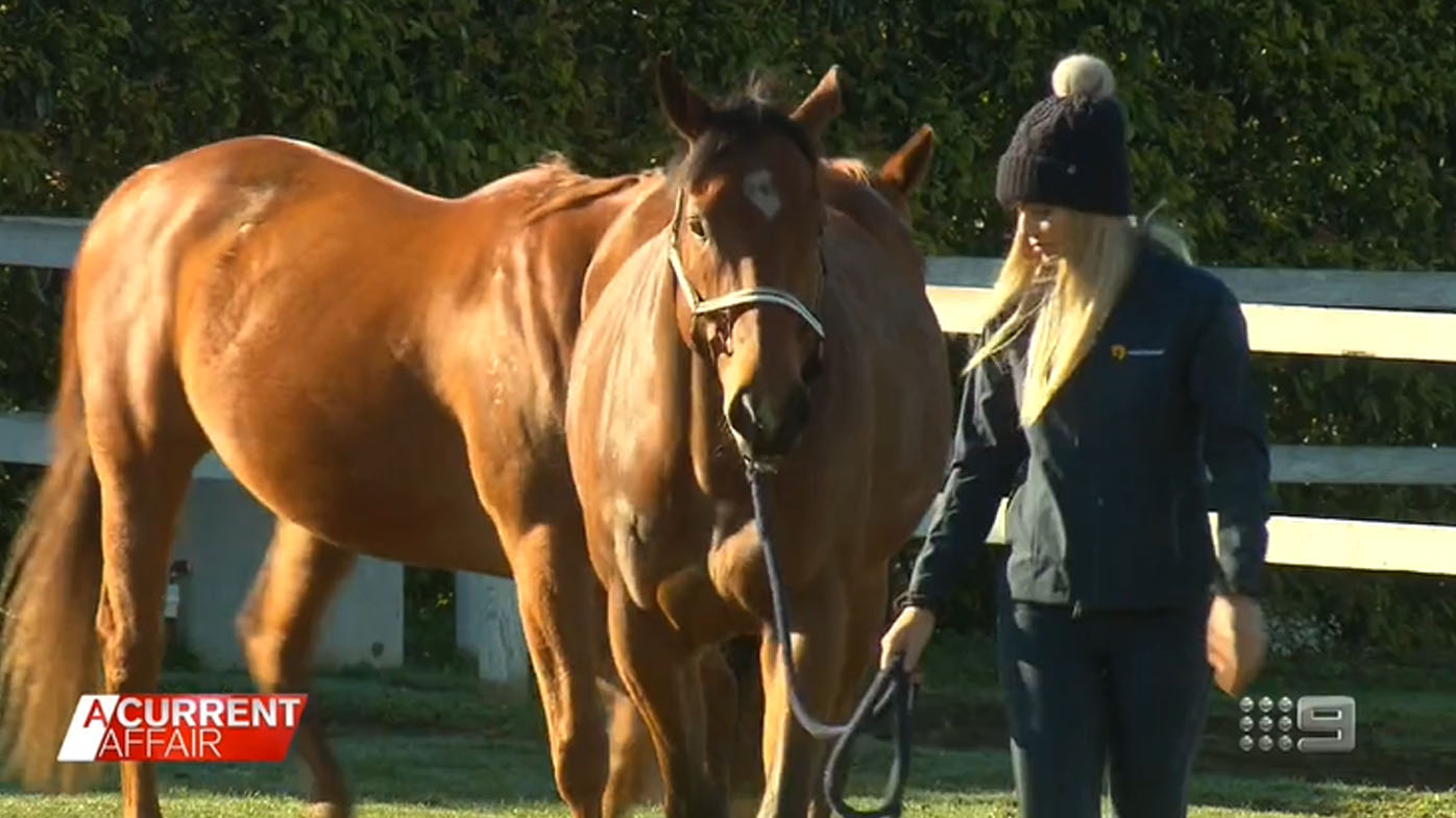 Retired racehorses help troubled youth on path to healing.